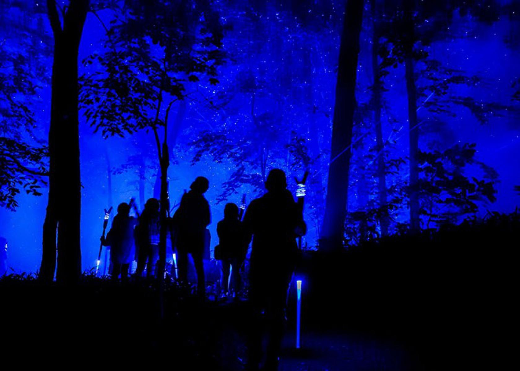 KAMUY LUMINA(カムイルミナ)- 阿寒湖の森ナイトウォーク2