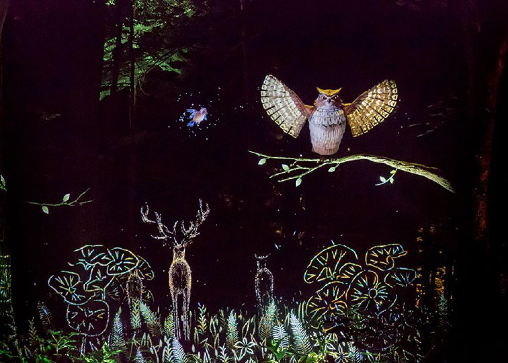 KAMUY LUMINA(カムイルミナ)- 阿寒湖の森ナイトウォーク