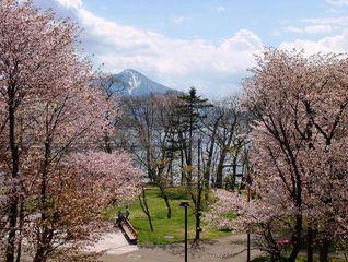 <終了>【10周年記念】桜の季節を愉しむ!フルーツ&スパークリングワイン付きプラン登場!