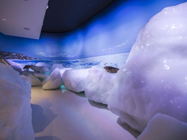 【流氷世界を体験】オホーツク流氷館入館券&流氷ソフト付きプラン登場