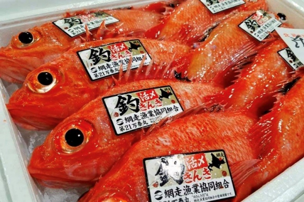 希少価値の高いブランド魚「釣りキンキ」