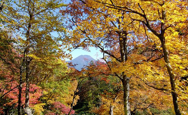 Αποτέλεσμα εικόνας για hokkaido forest
